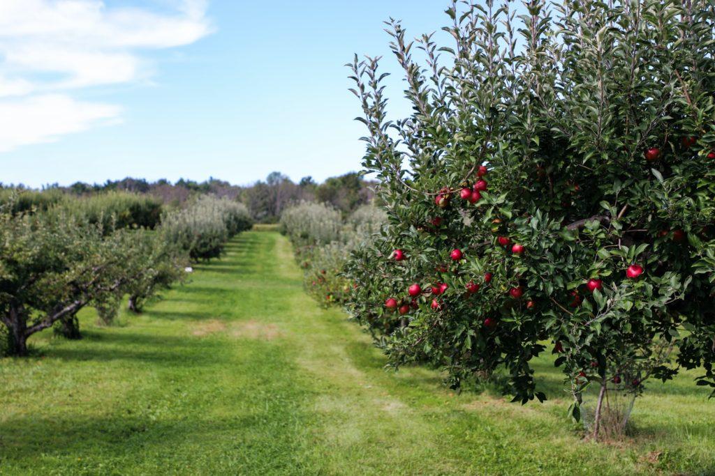apple trees fall Self Care